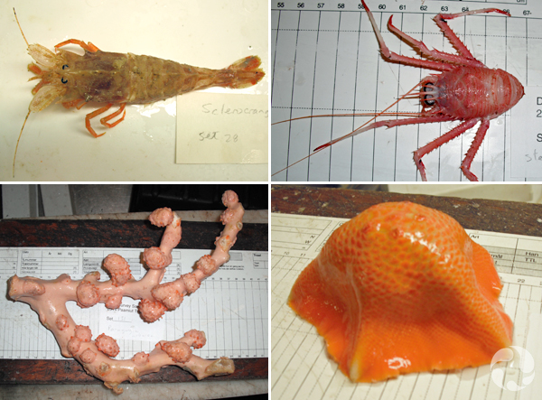 Collage: Four invertebrate specimens in the lab.