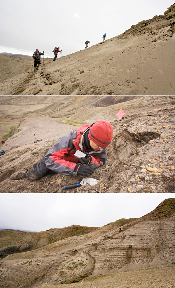 Collage: Four people hiking up a sandy slope, Natalia Rybczynski looking closely at the ground while lying on slope, and a view of the sandy, hilly terrain where the camel bones were discovered.