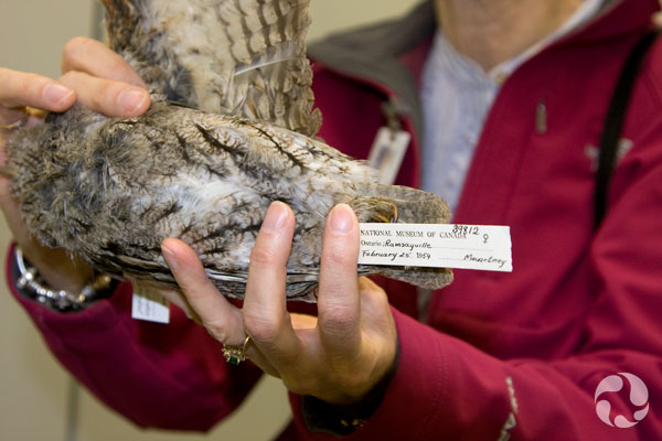 A woman holds an owl specimen showing its collection label.
