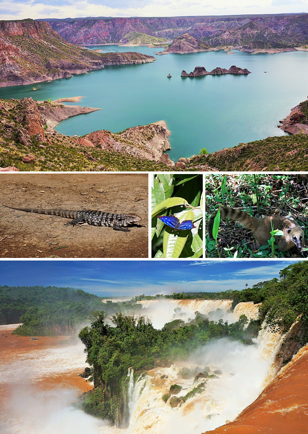 Collage: A lake surrounded by mountains, a lizard, a butterfly, a coati, Iguazú Falls.