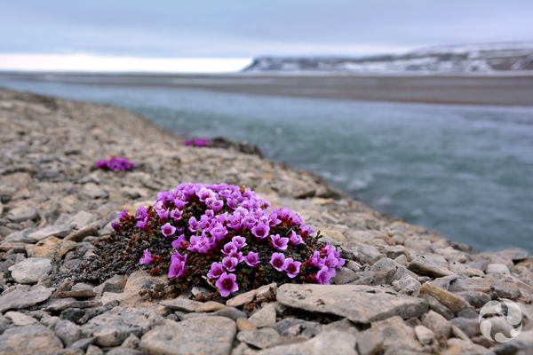 A blooming plant grows in rocky ground near water.