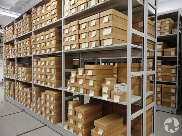 Rows of shoeboxes on shelves containing whale eardrums.
