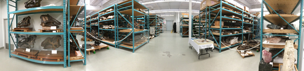 Panoramic view of shelving ranges containing dinosaur fossils.