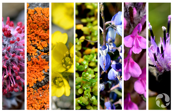 Collage: Flowering plants arranged to form a rainbow of colour.