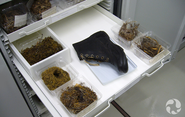 An open specimen drawer containing nests and a boot.