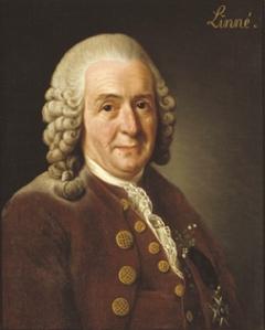 A portrait of Carolus Linnaeus.