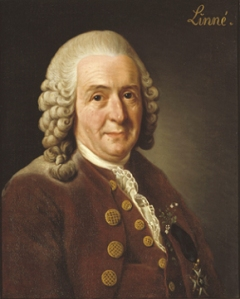 A portrait of Carolus Linnaeus.