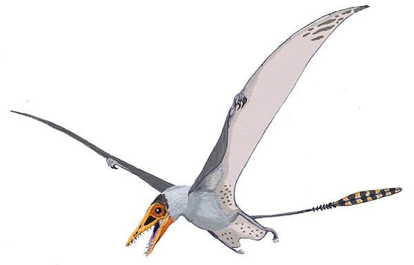 A pterosaur with wings extended.