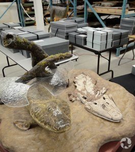View of the model of Tiktaalik, with boxes containing the real fossils in the background.