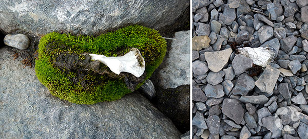 Collage: Moss and bones.