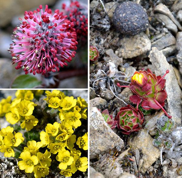 Collage: Three plants in situ.