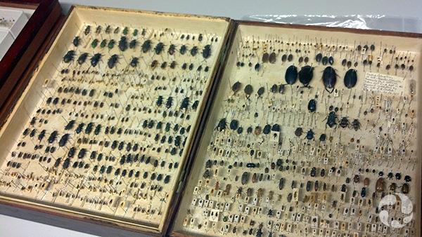 An array of pinned insects in a tray.