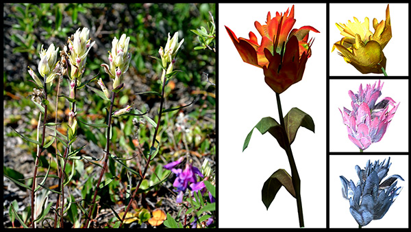 A photo of a flowering plant (Castilleja sp.) and images of mountain flower from the video game.