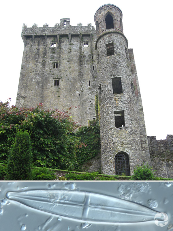 Collage: Blarney Castle, a diatom.