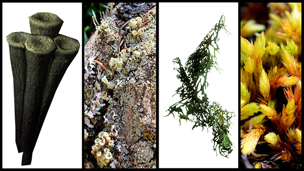 Photos of a lichen and a moss, paired with an image of their video-game counterpart.