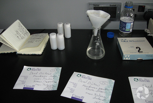 Papers and containers for liquids scattered across a work surface.