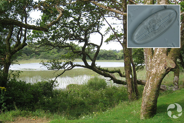 Images: The lake seen through trees on the bank, a diatom.
