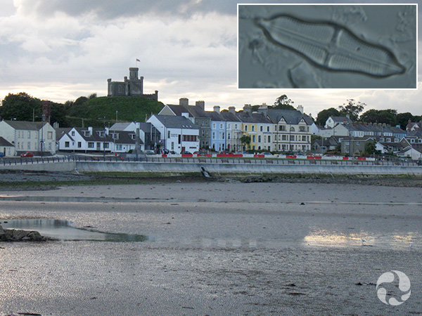 Images: Looking back at the sea wall and buildings during low tide, a diatom.