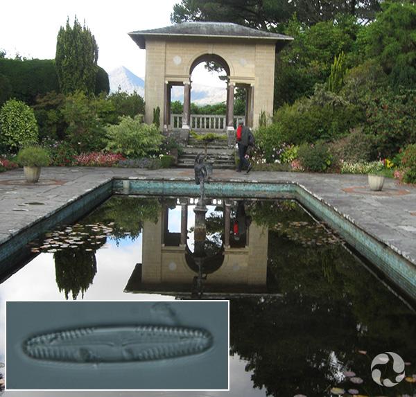 Images: A rectangular pool and a pavilion, a diatom.
