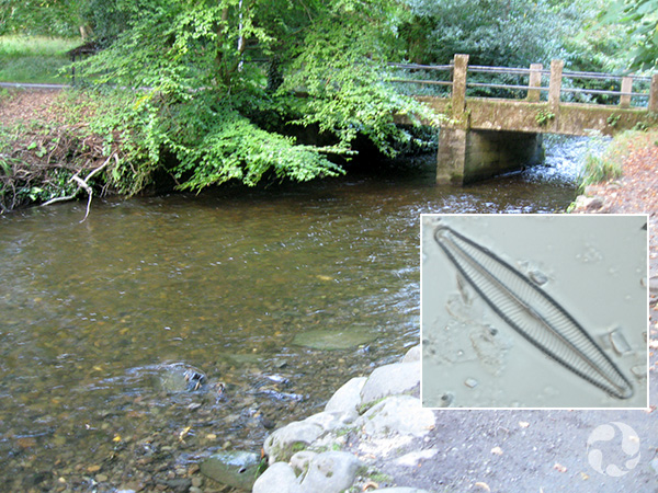 Image: A river flows under a bridge, a diatom.