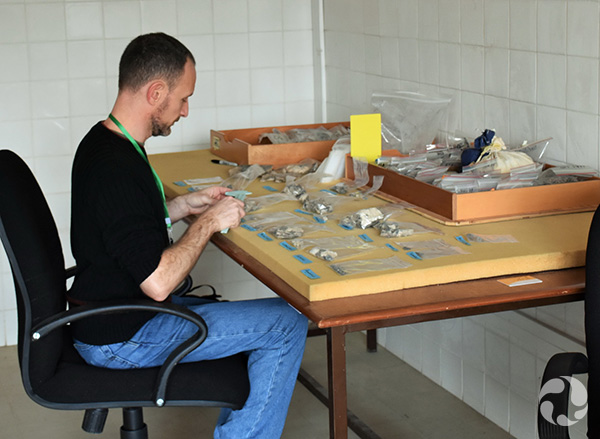 Scott Rufolo seated at a table, examining fish fossils.