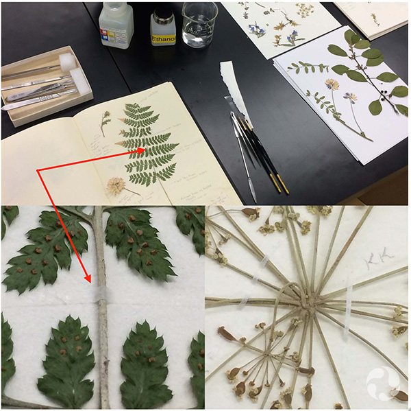 Several photos showing pages with plant specimens.