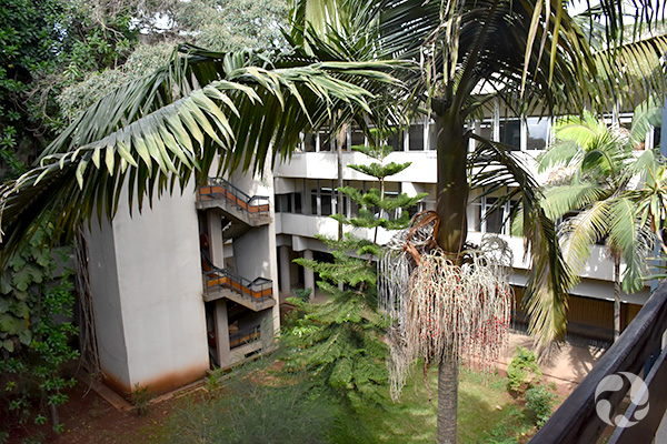 View of trees in a courtyard surrounded by a building with white walls.