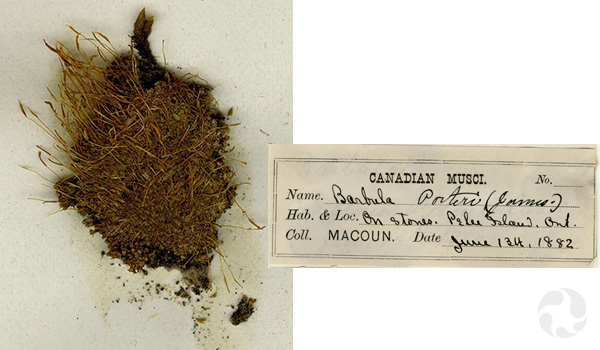 A close-up of a moss specimen and a collection label from 1882.