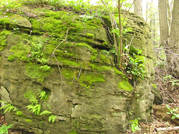 A rocky outcrop covered in mosses.