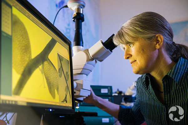 Jennifer Doubt looks at a magnified image of a plant on a screen.