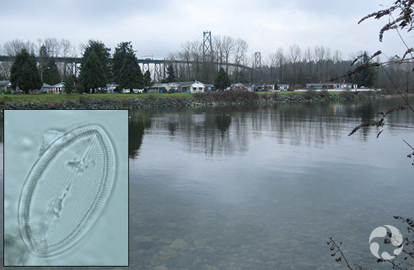 Collage: View across the river, a diatom.