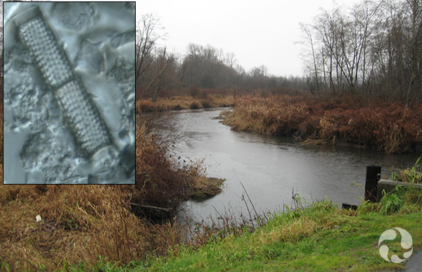 Collage: A bend in a creek, a diatom.