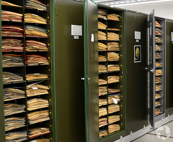 Cabinets of shelves piled with herbarium sheets.