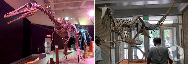 Composite: Two photos of mounted dinosaur skeletons.