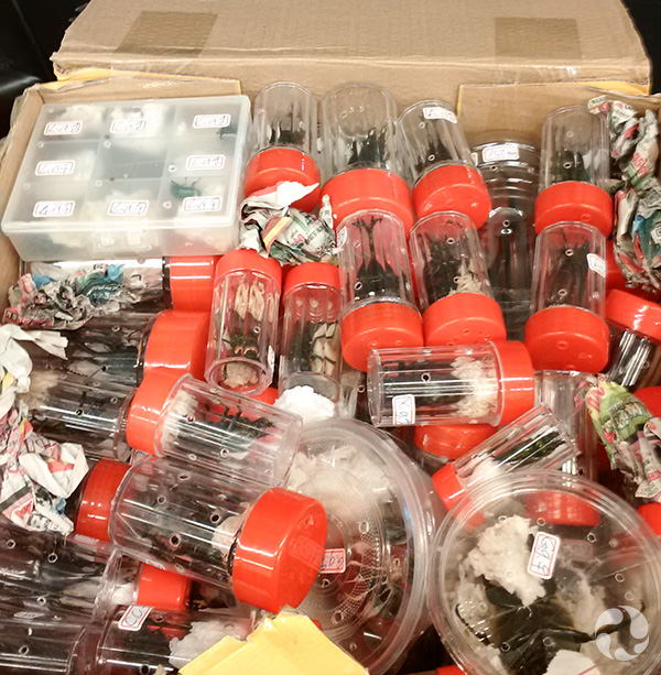 The open cardboard shipping box containing transparent tubes and boxes of individual beetles.