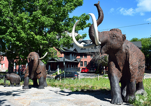 Three woolly mammoth sculptures in a park.