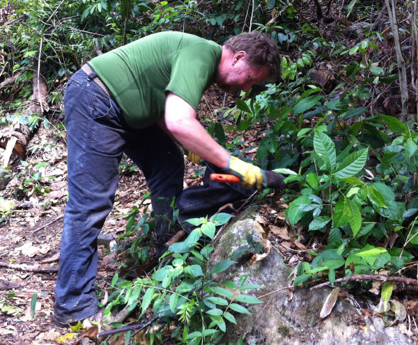 Bob Anderson digs in a forest floor.