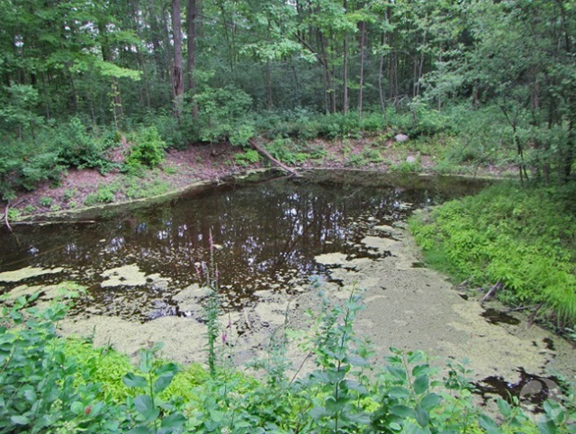 A pond.