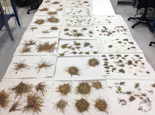 Pieces of paper on the floor, covered with plant specimens.
