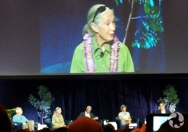 Composite: Jane Goodall and an on-stage panel discussion.