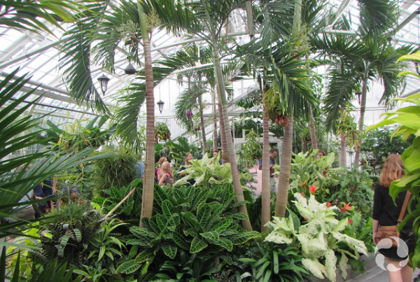 A view of a large botanical-display room.