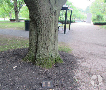 A tree outside with a plaque planted in the ground near its base.