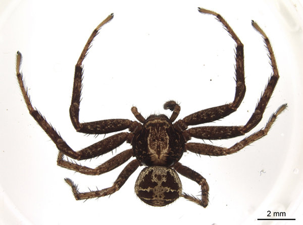 Overhead view of a spider.