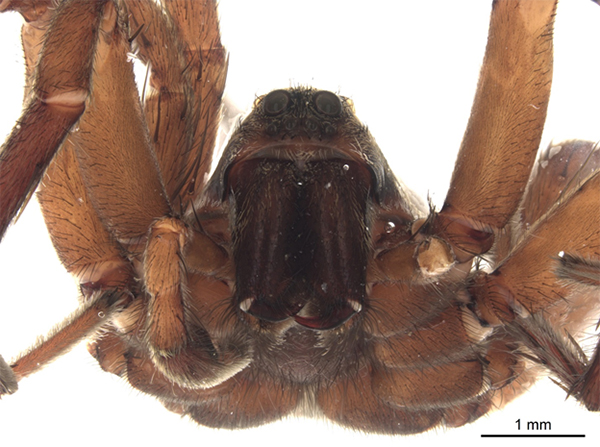 Close-up of a spider.