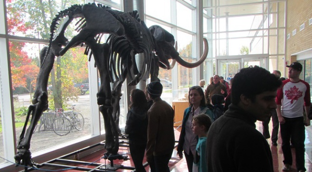 People look at a mounted mastodon skeleton.