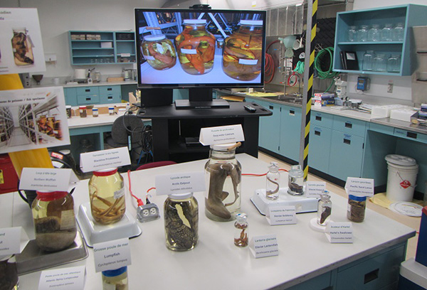 Specimens in the fish lab.