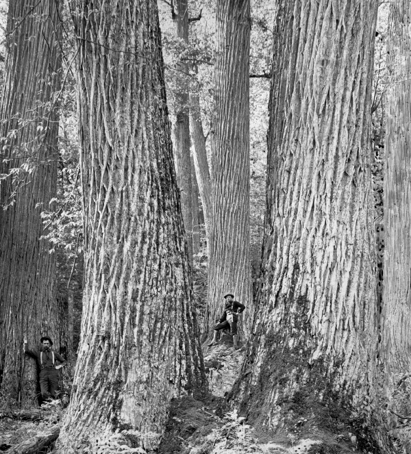 Two men stand among trees.