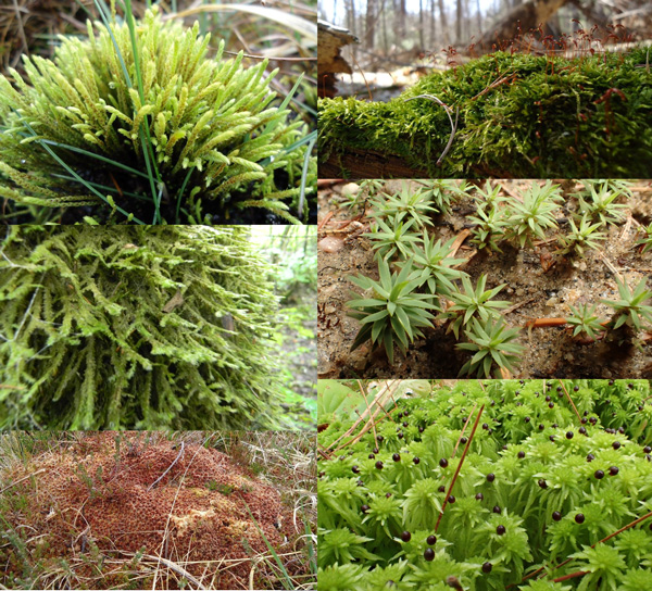 A collage of mosses.