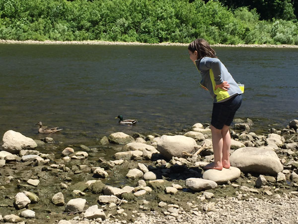 A young girl looking at Mallards in the river.