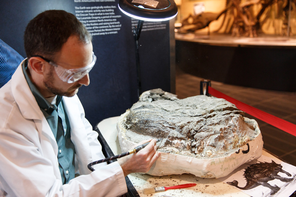 A man uses a pneumatic tool to remove rock from a dinosaur fossil.